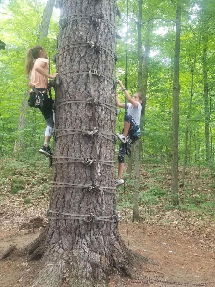 Arbre en arbre